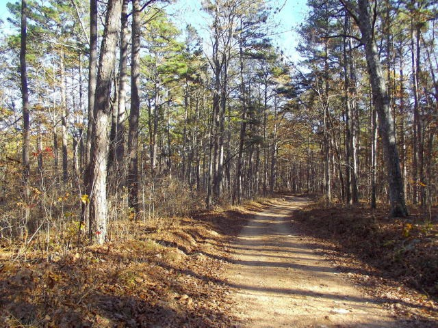 Land in National Forrest for Sale