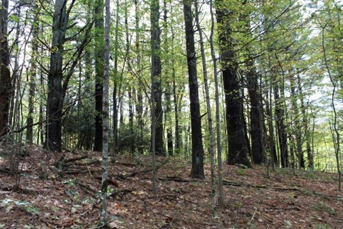 20.57 ACRES OF LAND FOR SALE  IN CARROLL COUNTY, VIRGINIA