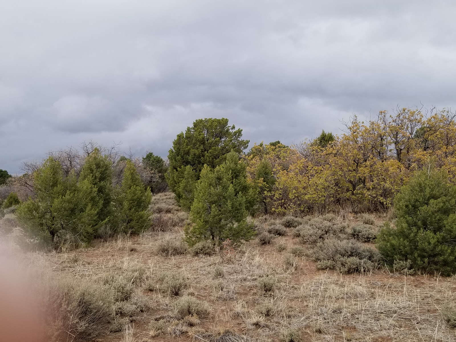 Elk Hunting Land For Sale Colorado Acres Near Telluride CO