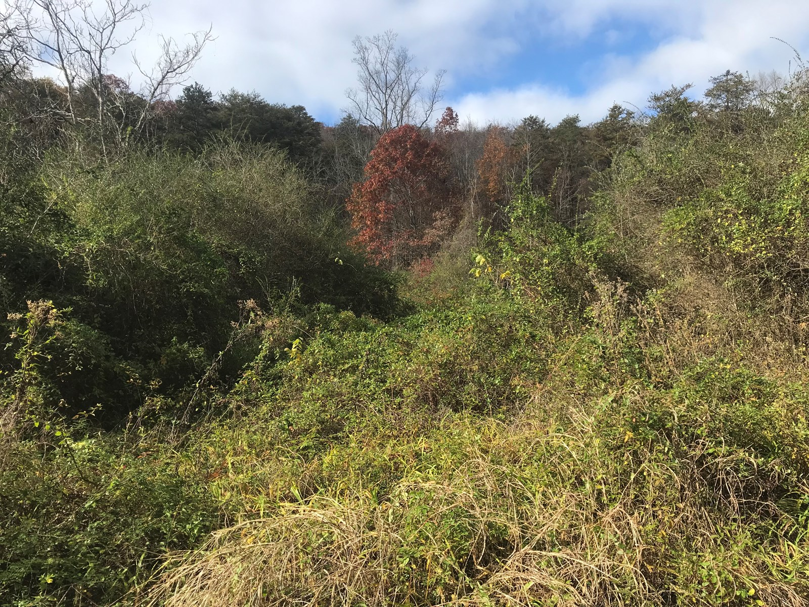 East Tennessee Unrestricted Acreage| Mohawk| Greene County
