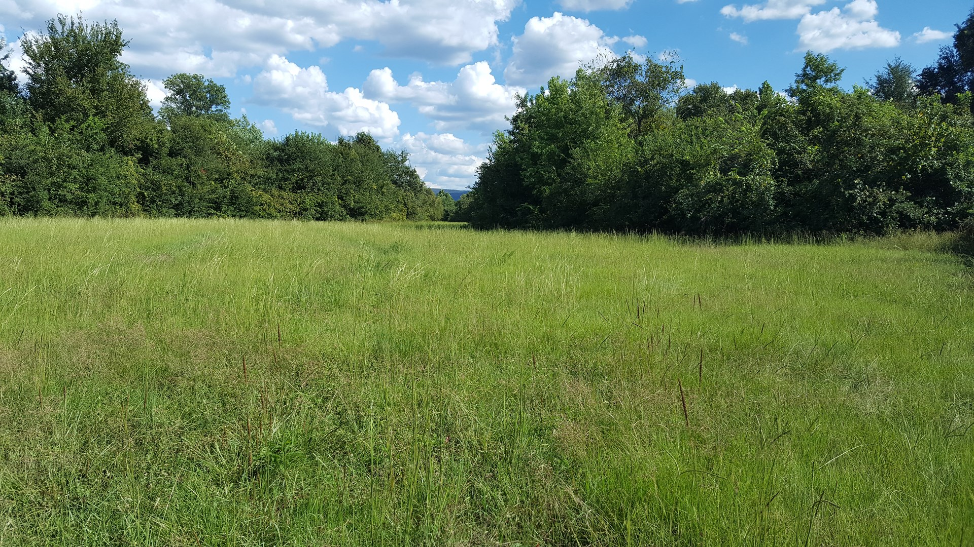 Ranch Land for Sale| SE Oklahoma