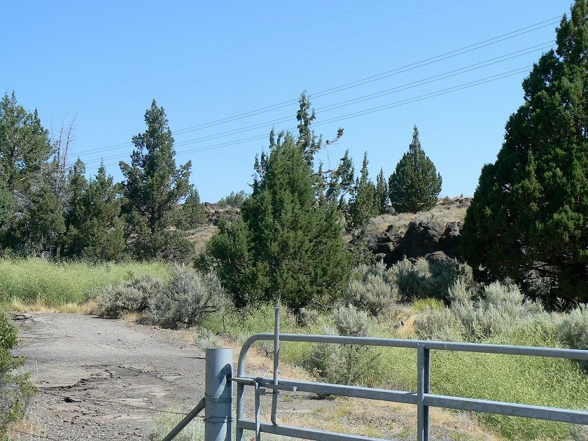 High Desert Paradise with natural springs!