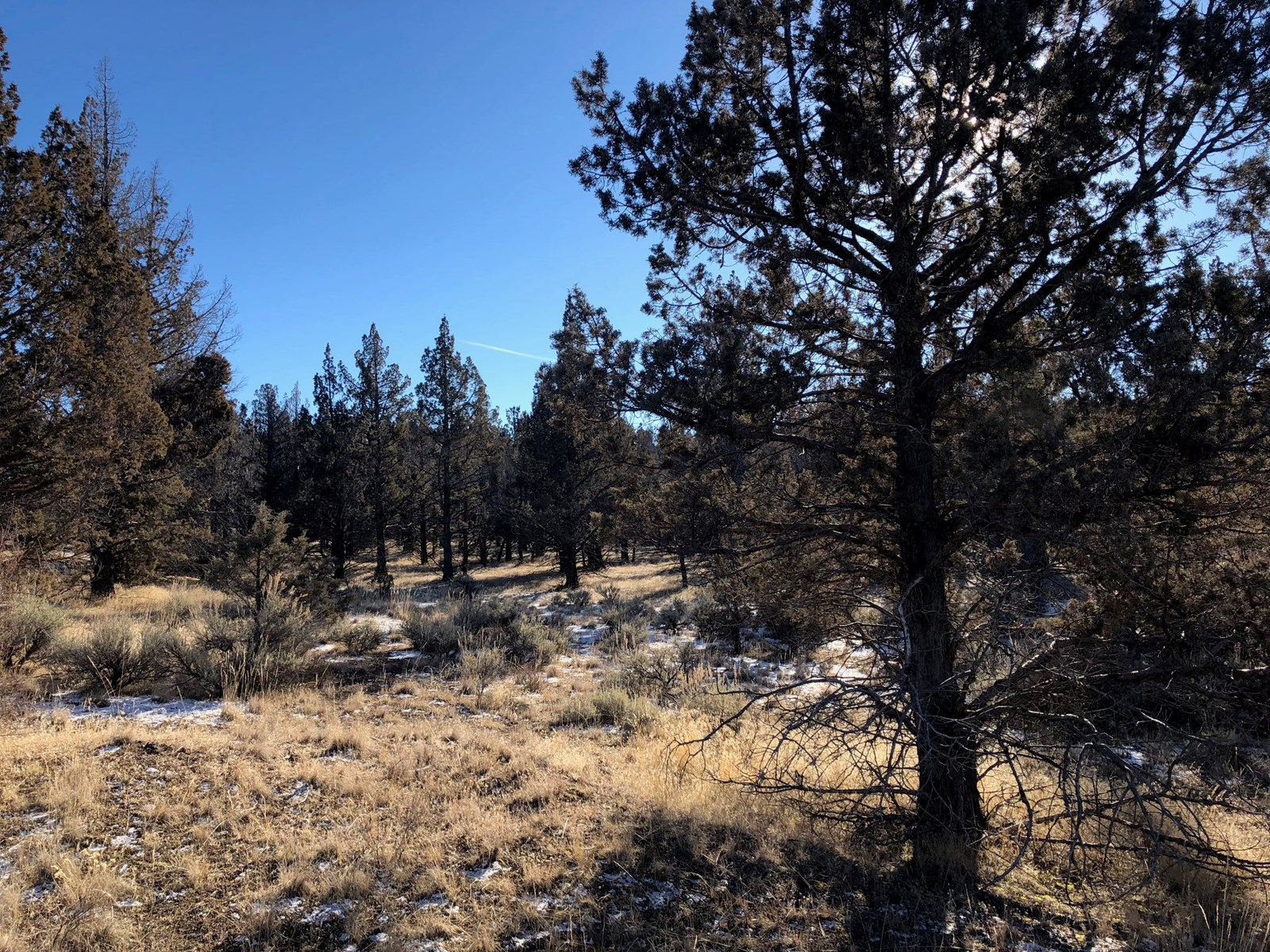 1.47 acres build-able lot in Modoc County, Northern CA