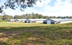 REDUCED 4 HOUSE BROILER POULTRY FARM FOR SALE 20 ACRES SW MS