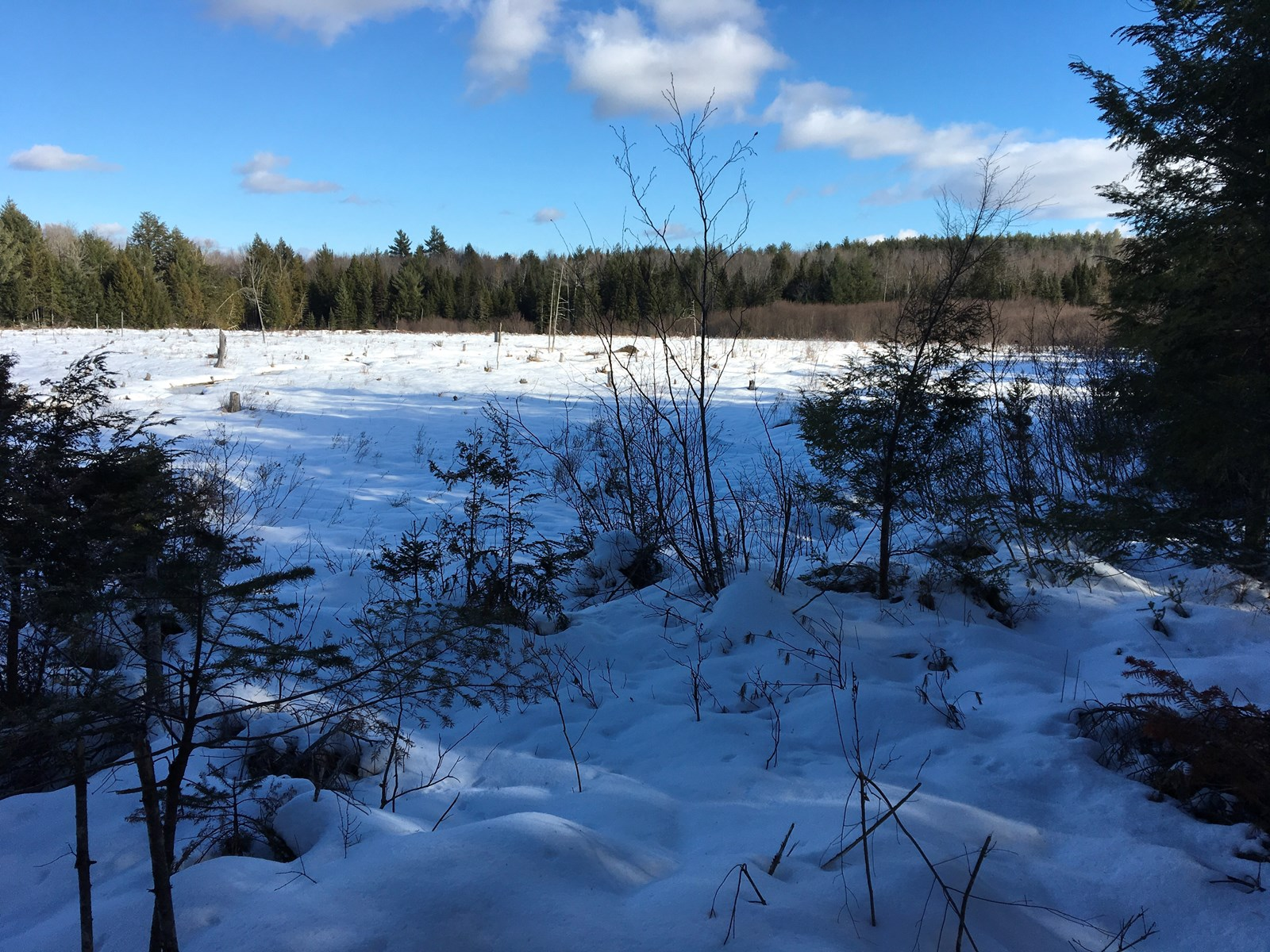Forest Land For Sale in Garland Maine