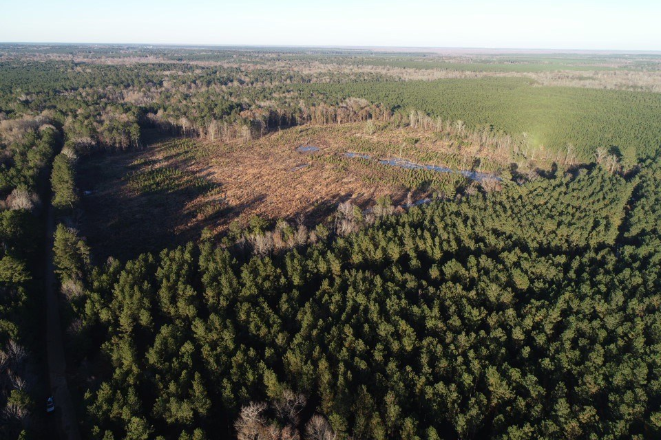 Large Pine Timberland Recreational Hunting Property for Sale
