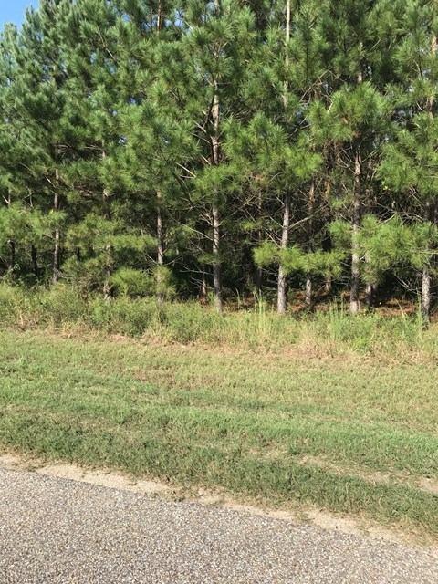 Hunting Land for sale in Houston County Alabama