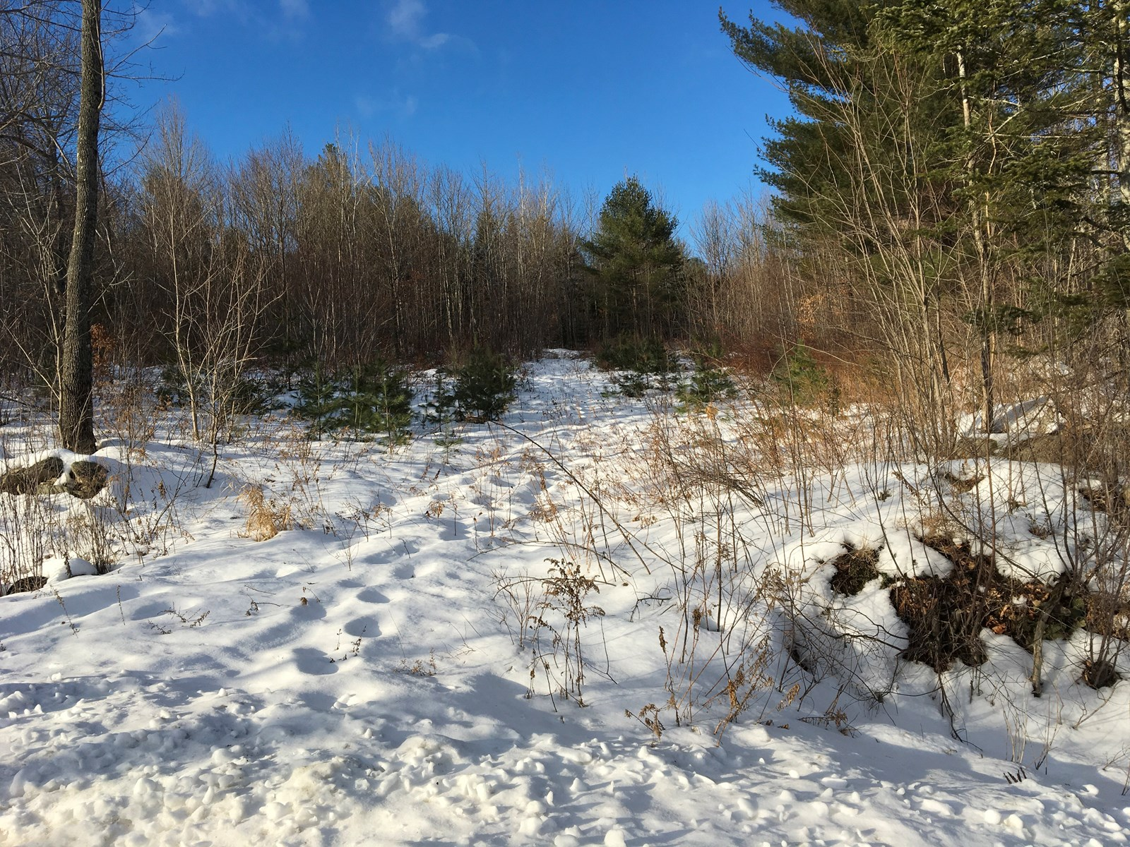 Investment Land Property For Sale in Garland, Maine