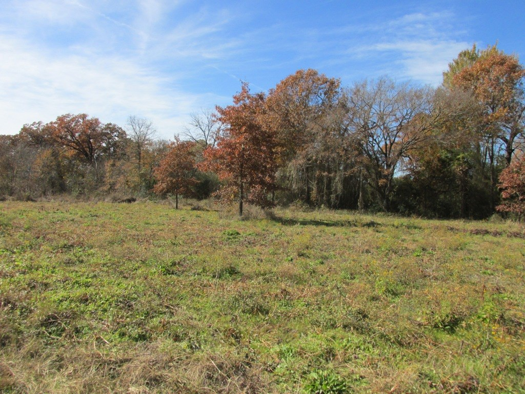 2 LOTS FOR SALE IN TENNESSEE COLONY FOR HOME SITE
