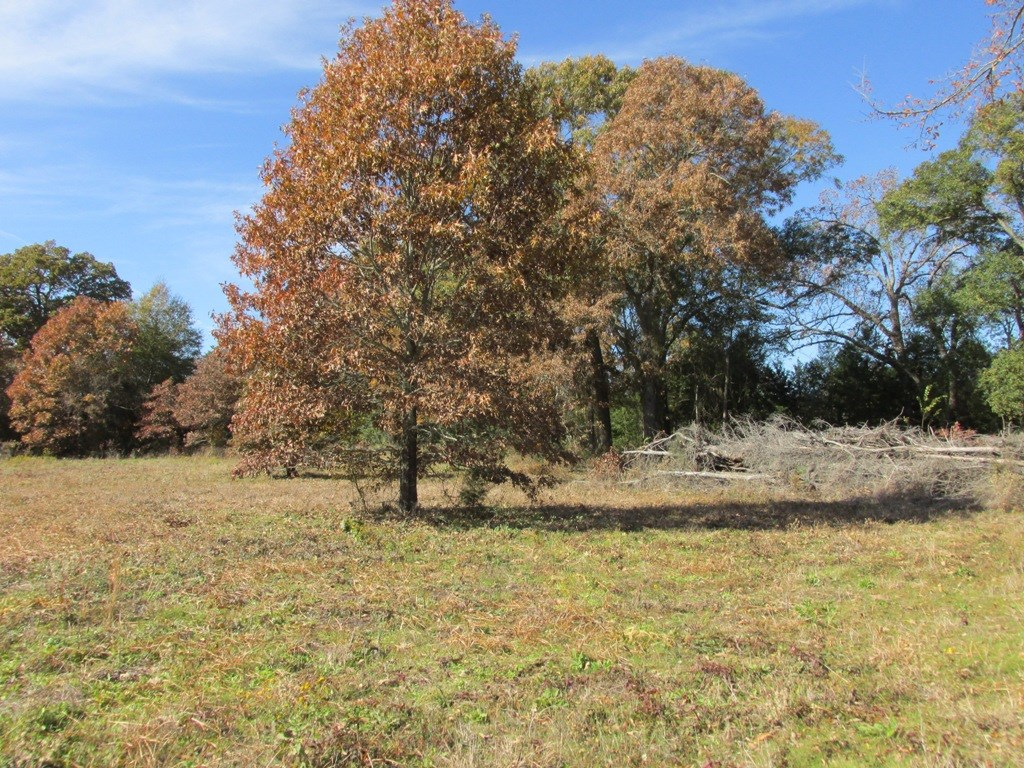 RURAL LOT FOR SALE IN TENNESSEE COLONY
