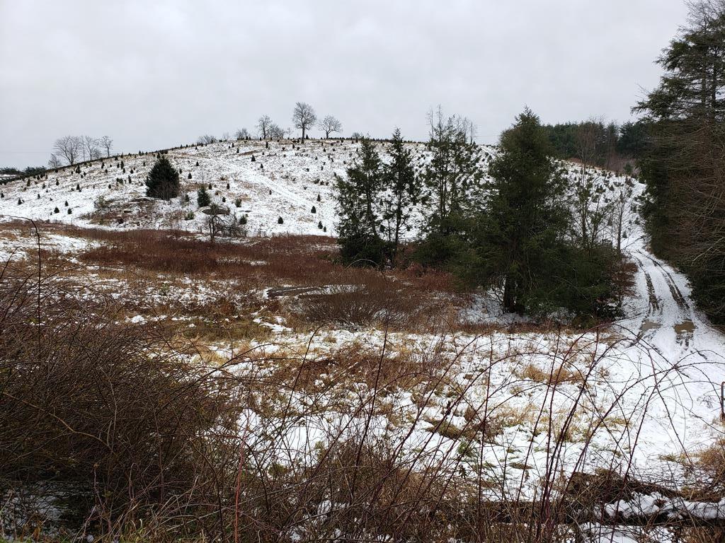 Small Acreage Close to the Virginia Creeper Trail.