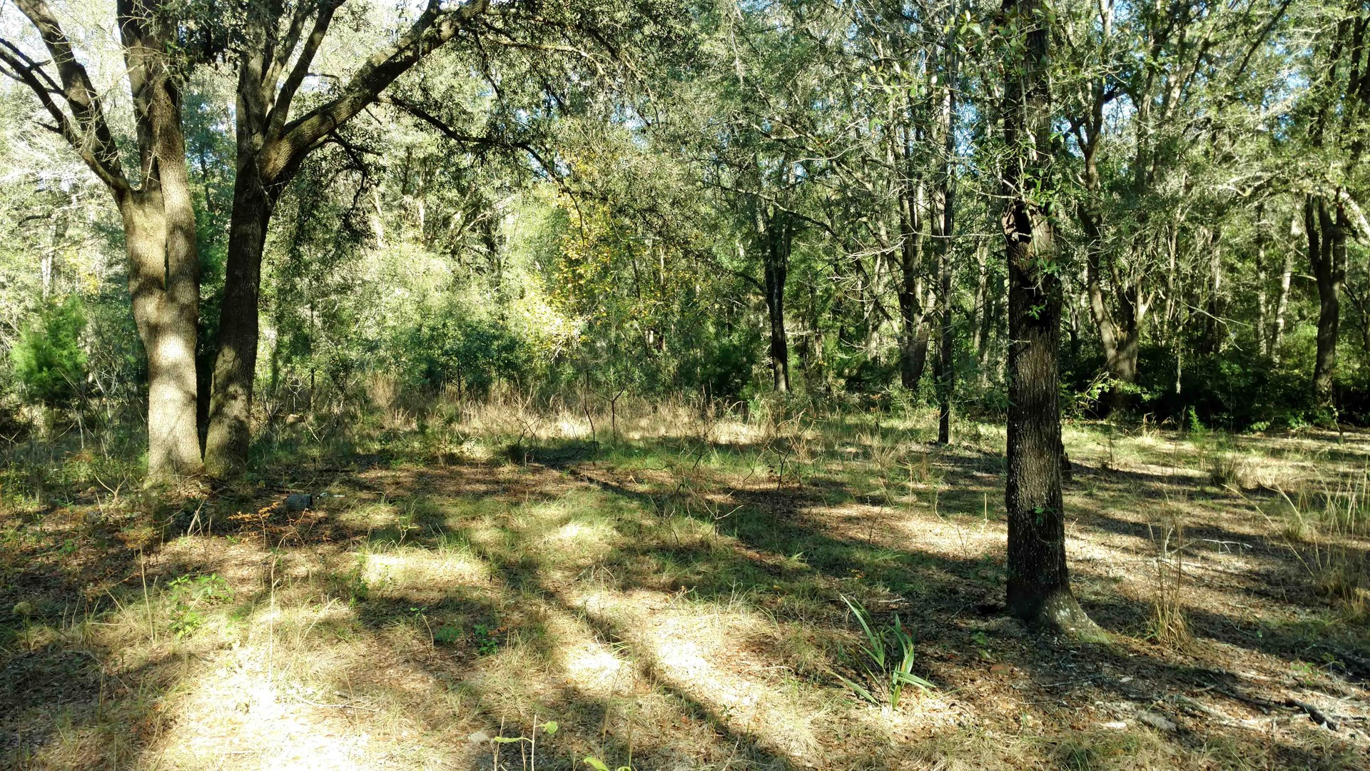 10 ACRES FOR SALE IN FORT WHITE, FLORIDA
