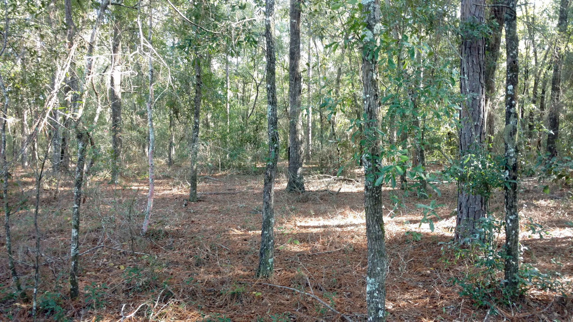 5 ACRES FOR SALE IN FORT WHITE, FLORIDA