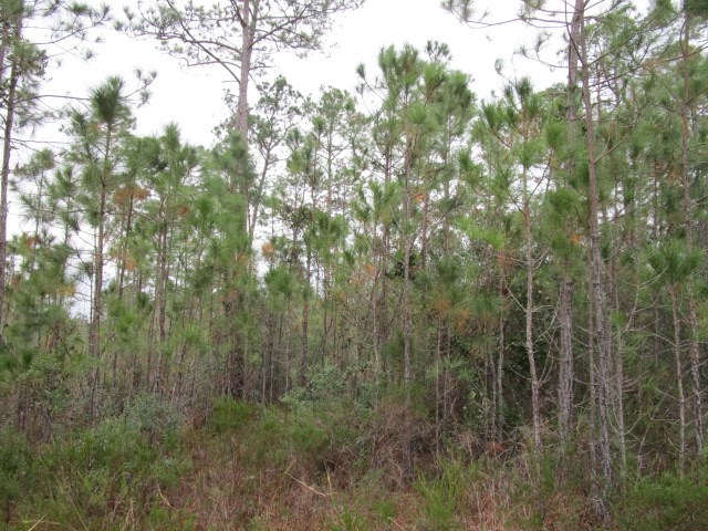 Remote Florida hunting land for sale.