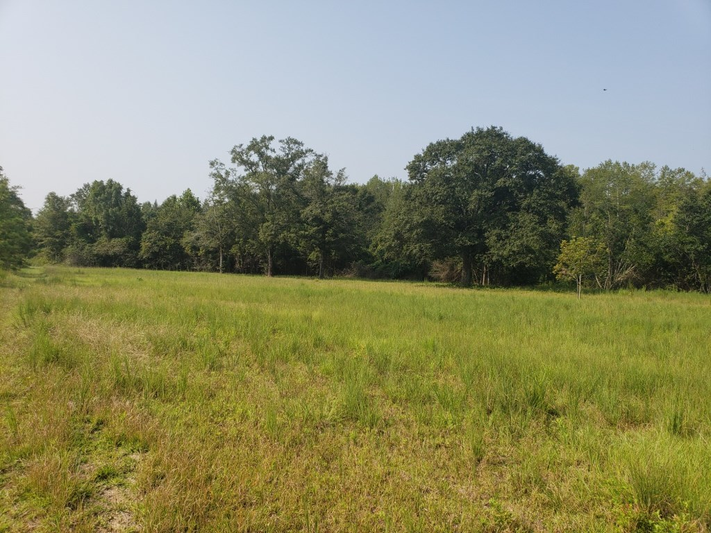 22.4 ACRES IN FADETTE COMMUNITY, SLOCOMB, ALABAMA
