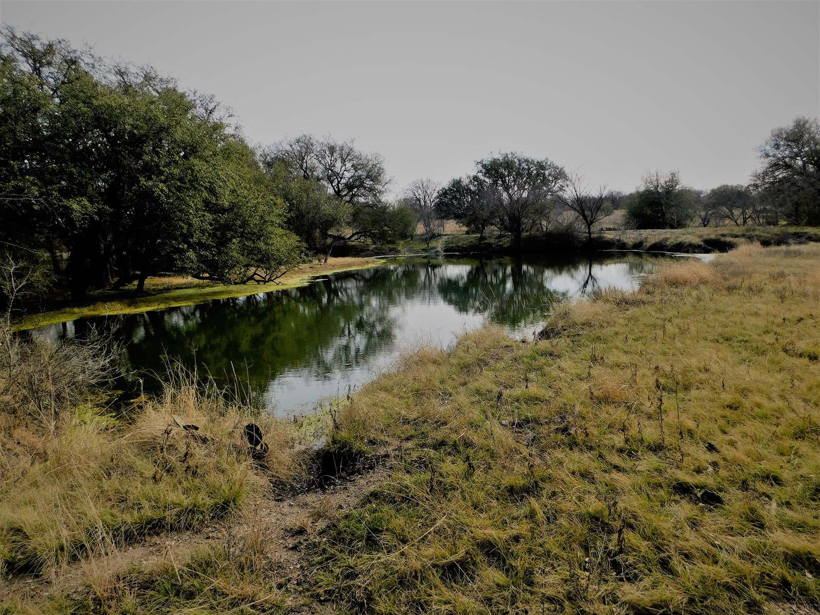 CATTLE RANCH WAITING ON YOU! BROWN COUNTY TEXAS