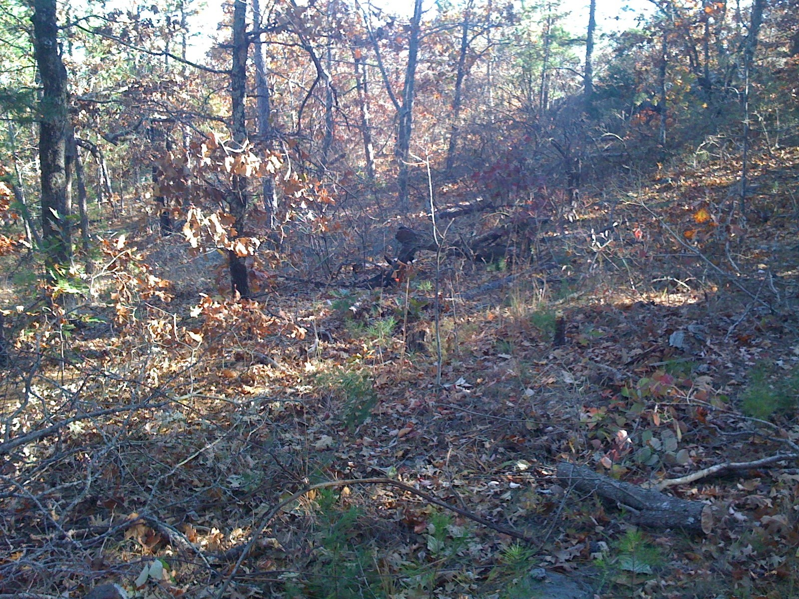 Mountain Hunting Land For Sale Clayton,OK-Wooded with Creek