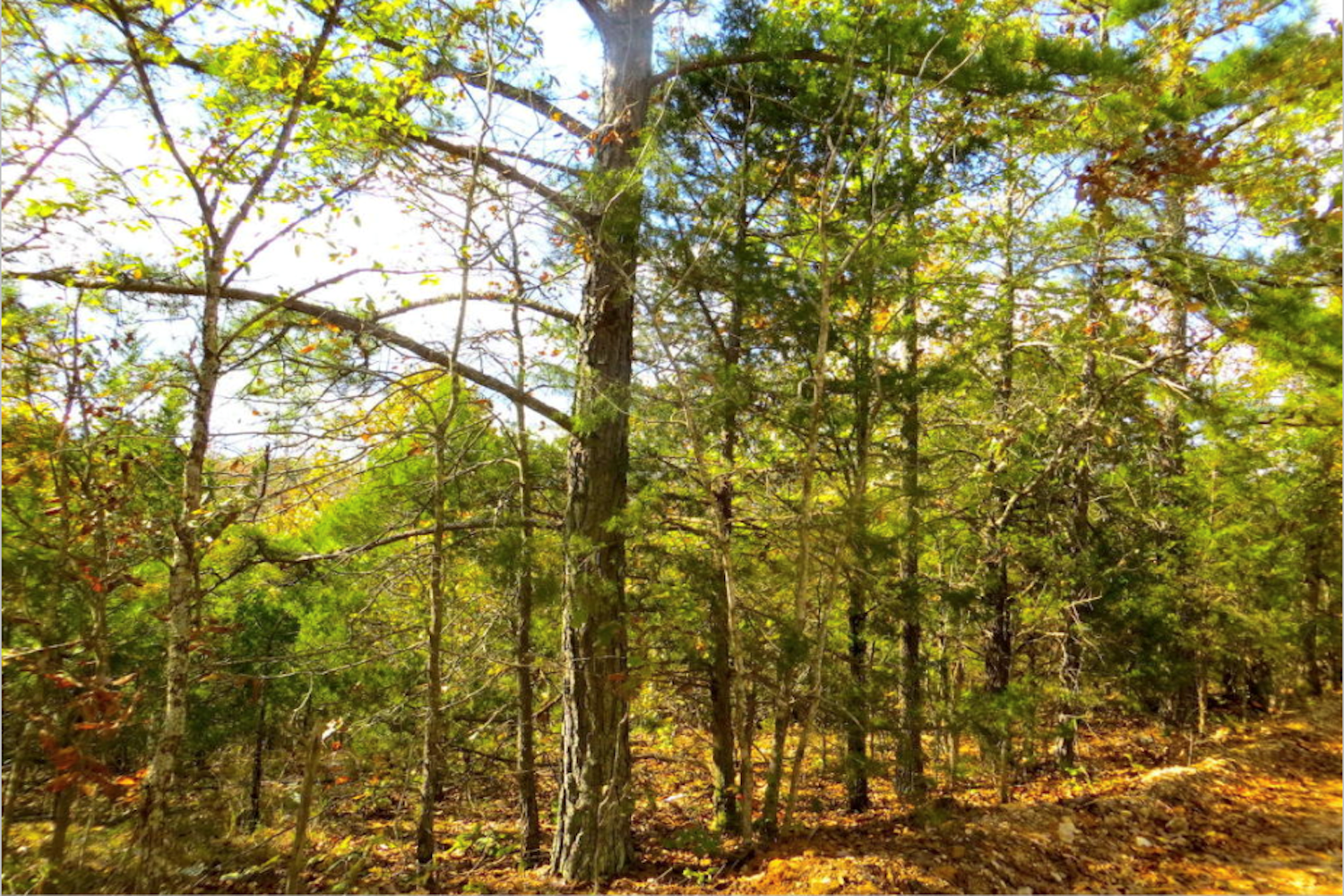 ACREAGE - HUNTING - HOMESITE