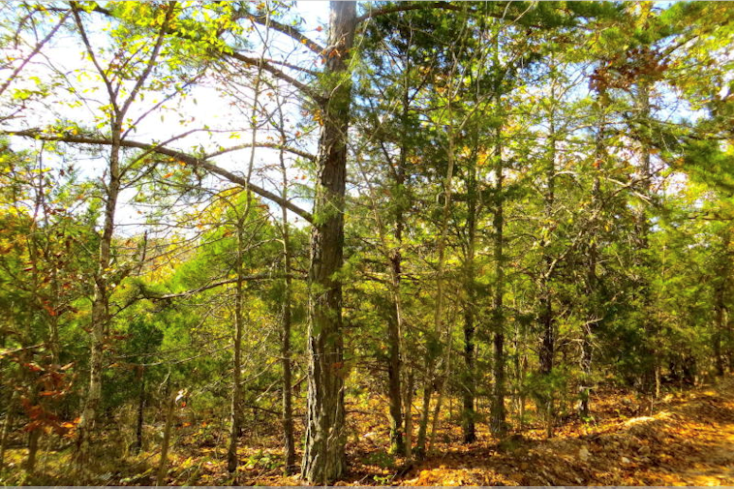 RECREATIONAL - ACREAGE - HOMESITE