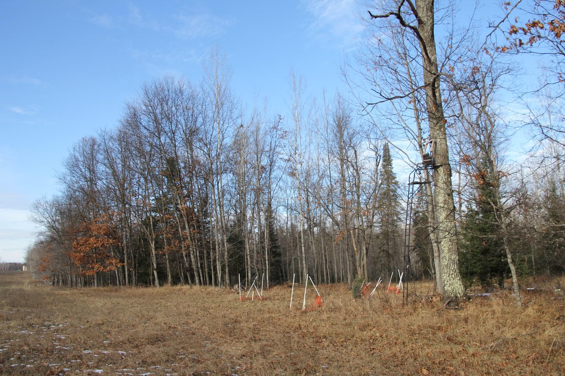 Northern Michigan Hunting Property Alcona County Deer Hunt