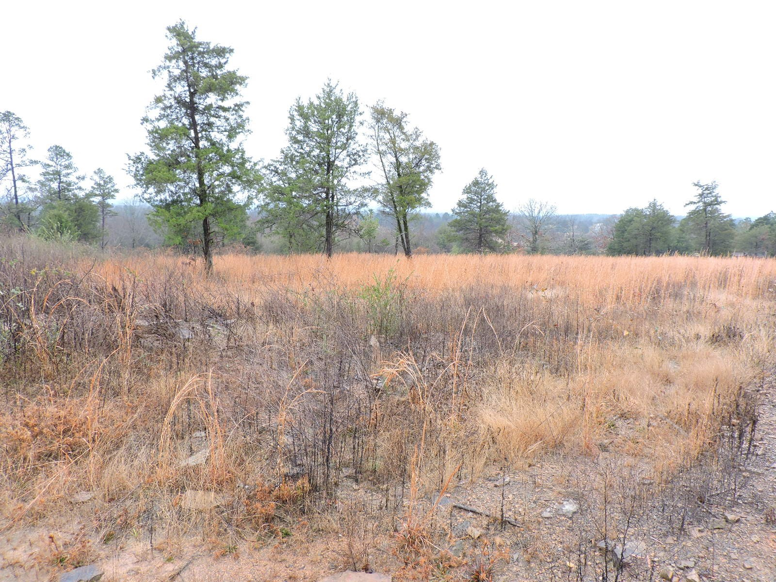 Great Hunting Property and Building SIght with Cabin