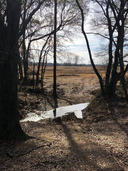 60+- ACRE OKLAHOMA HOMESITE WITH LIVE CREEK