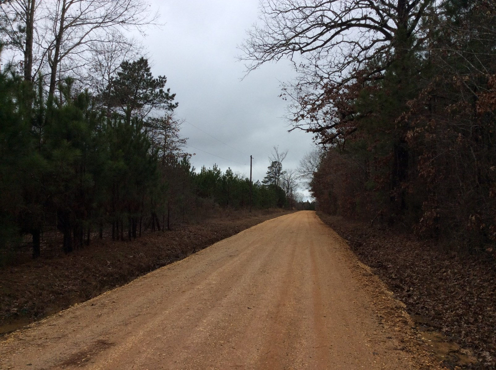 Young Investment Pine Timberland near Sheridan, AR for Sale!