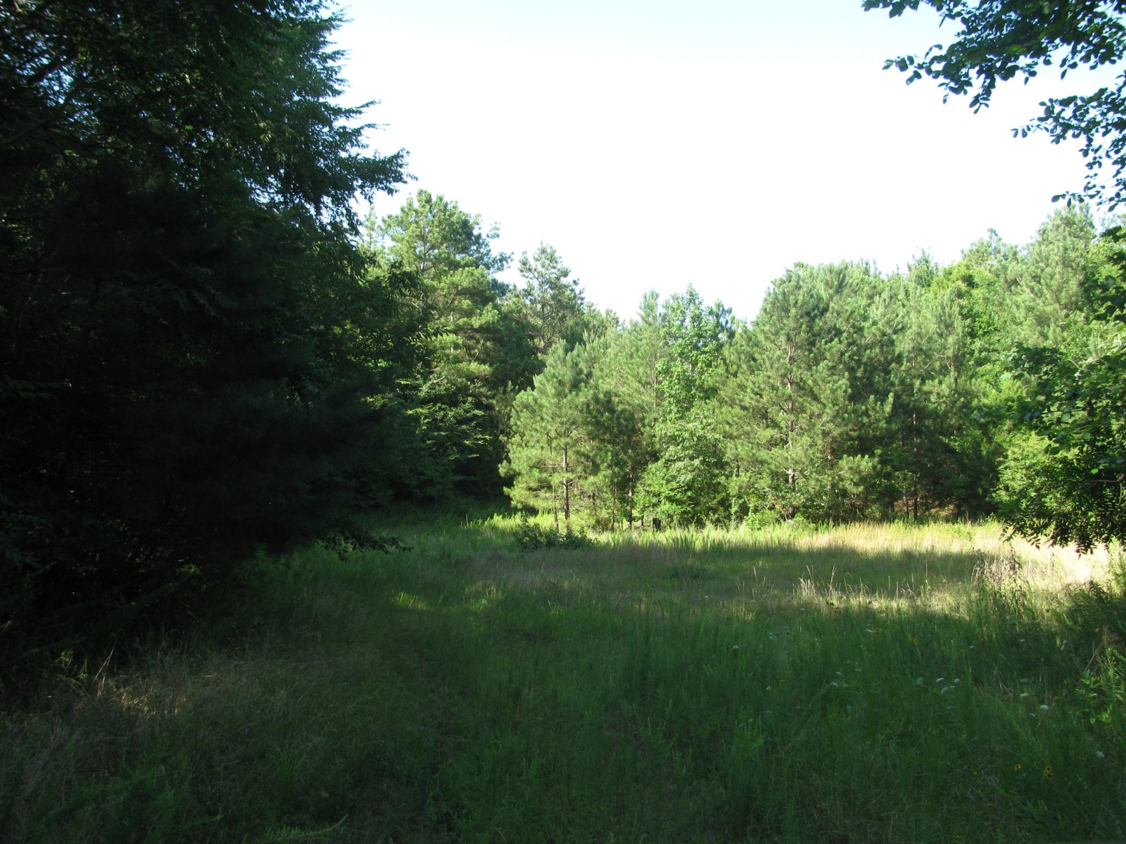 TN HUNTIING LAND FOR SALE, DEER, DUCK, POND, CREEK, TIMBER