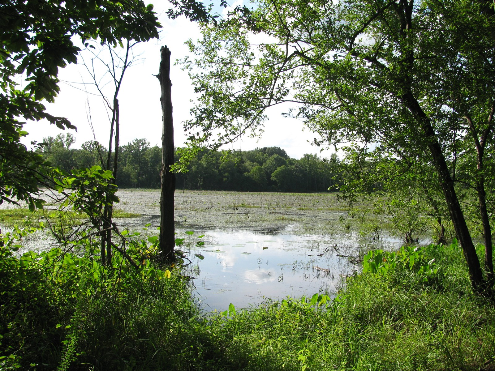 HUNTIING LAND IN TN FOR SALE, DEER, DUCK, POND, CREEK