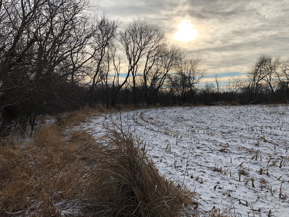 126 Acres with 60 Tillable Dodge County Land for Sale