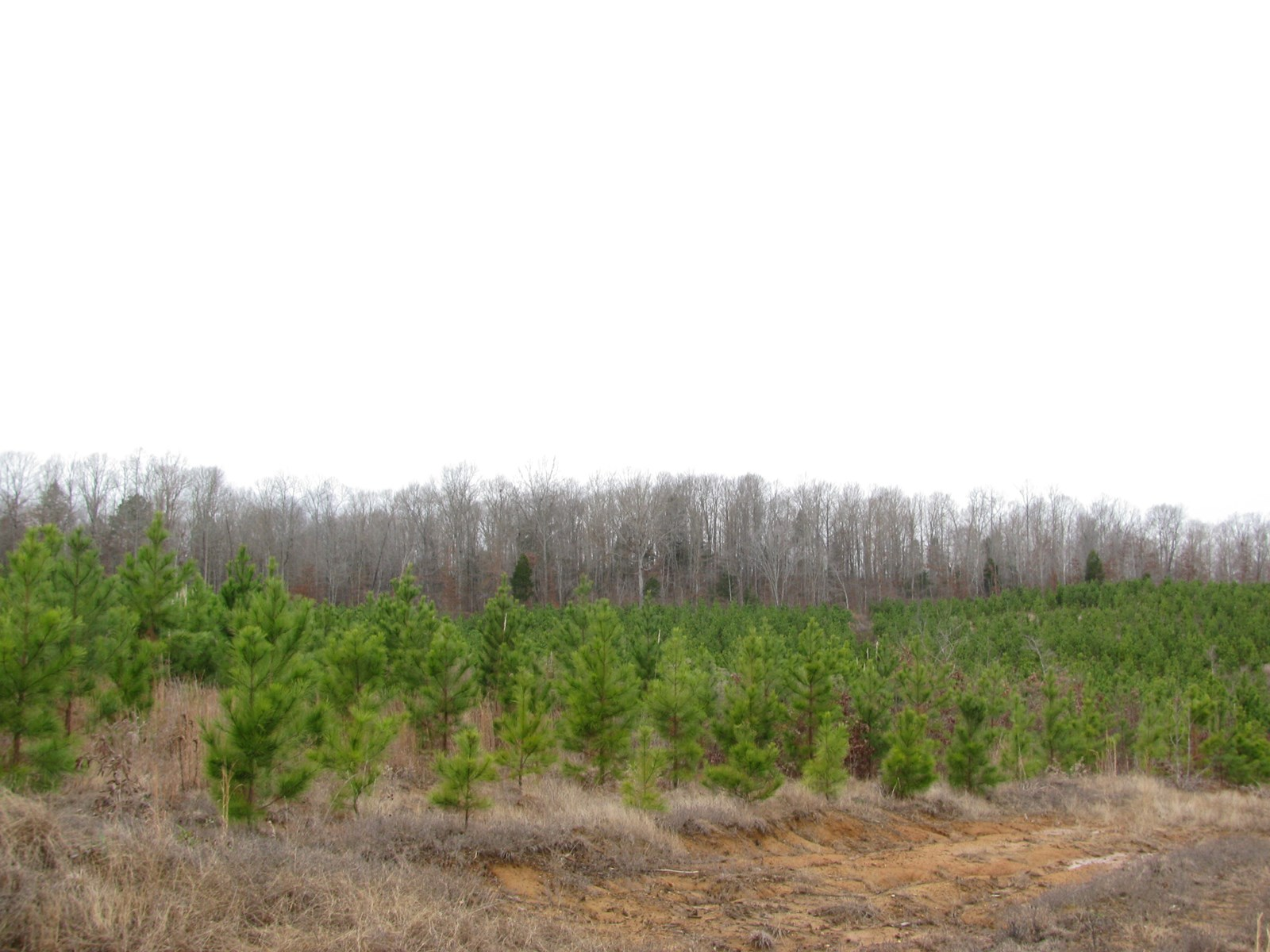 LAND IN TN FOR SALE W/CREEK, FIELD, HUNTING, OWNER FINANCING