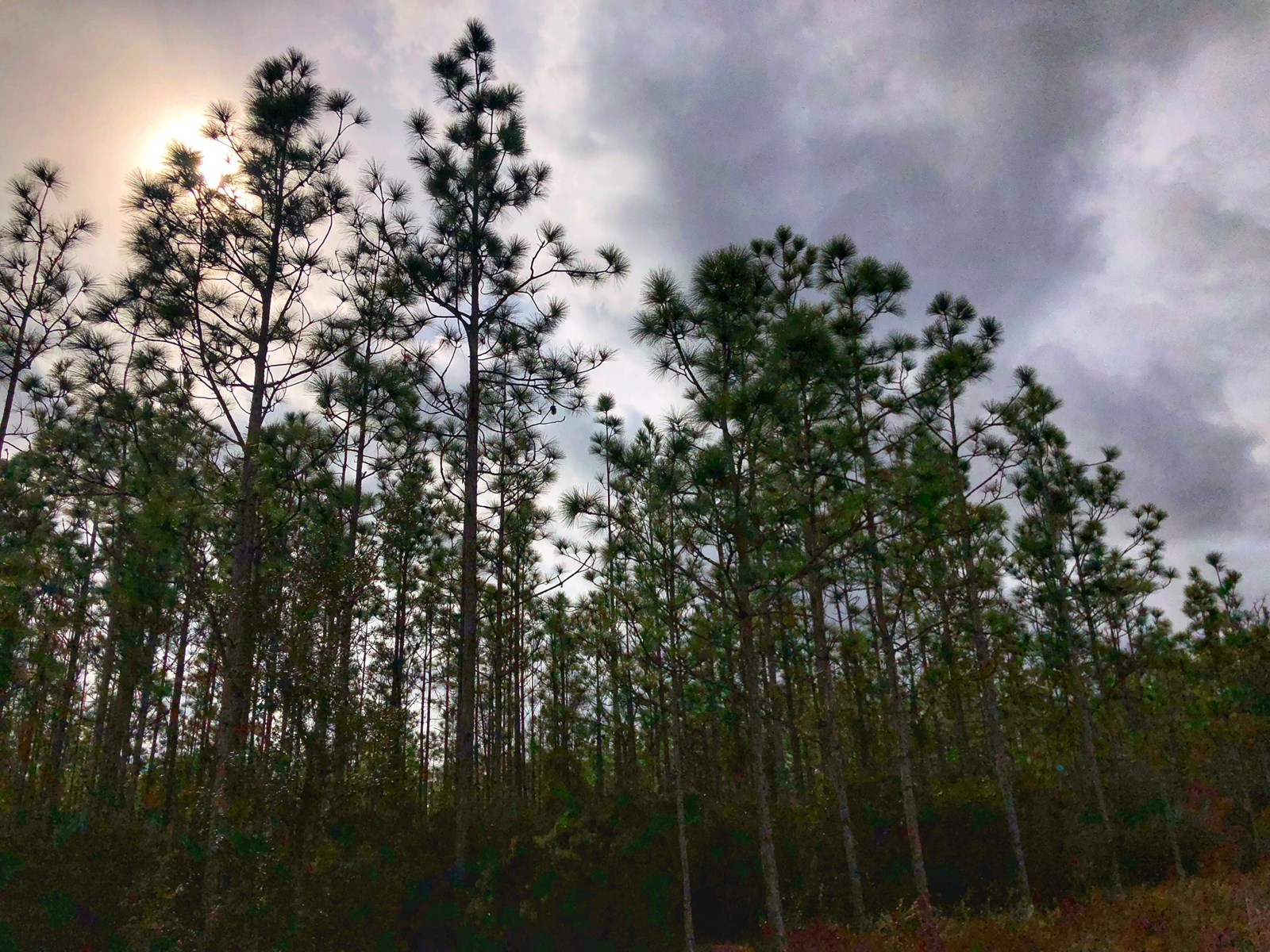 78 ACRES IN BEAUTIFUL GILCHRIST COUNTY