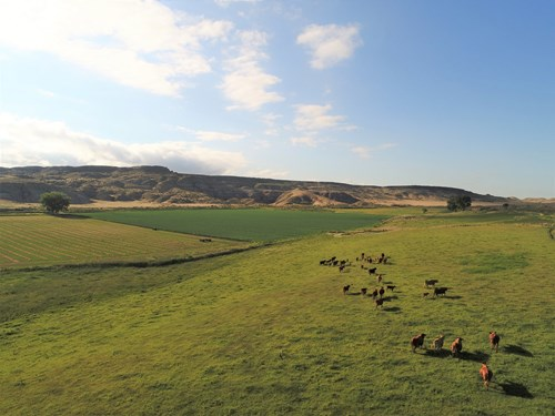 1100 Hay and Cattle  Farm/Ranch, Greybull, Wyoming