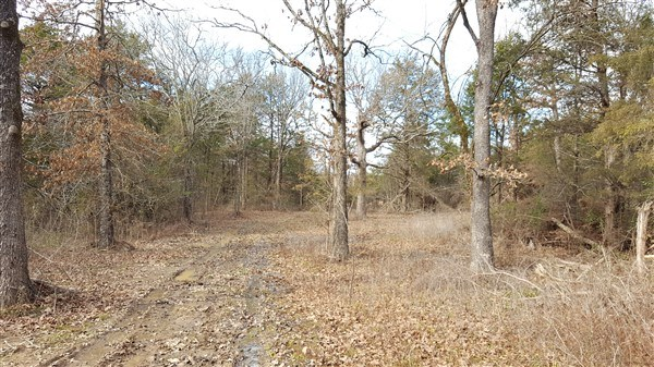 44 Acres with Hilltop Setting and Mountain View