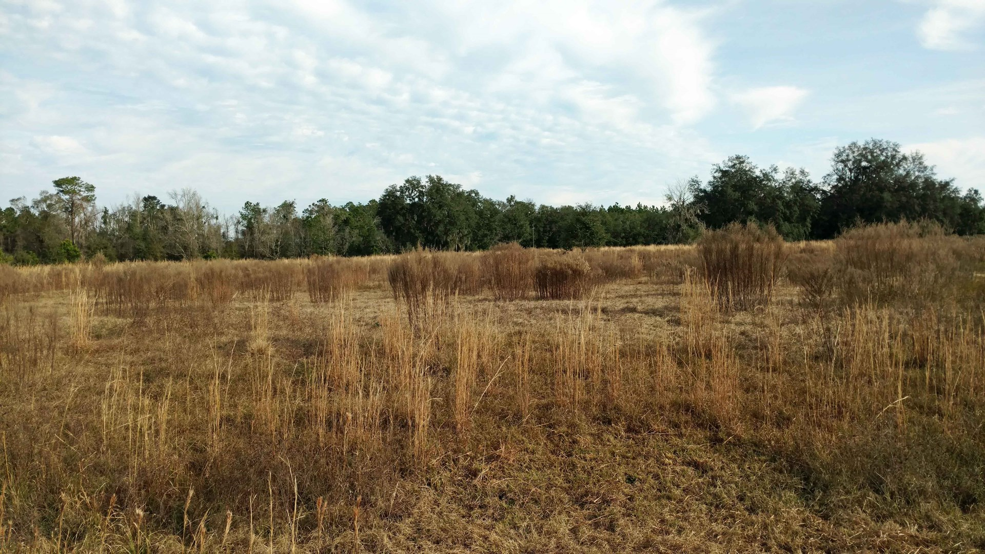 4.8 ACRES FOR SALE IN LAKE CITY, FLORIDA