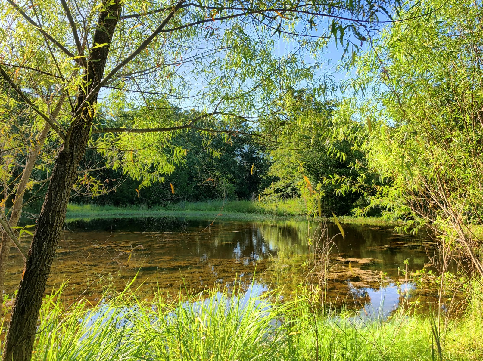 HUNTER'S DELIGHT! 117 ACRES WITH 3 PONDS/ WET WEATHER CREEK