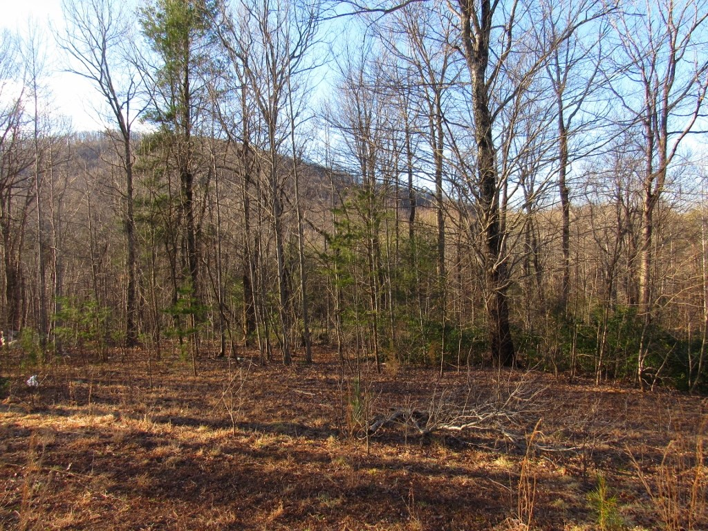 7.3 Acres & 2 Mobile Homes for Sale at Auction in Ferrum VA