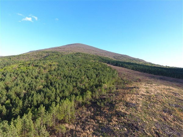 170 Acre Timber Investment and Hunting Property on Sugar Loa