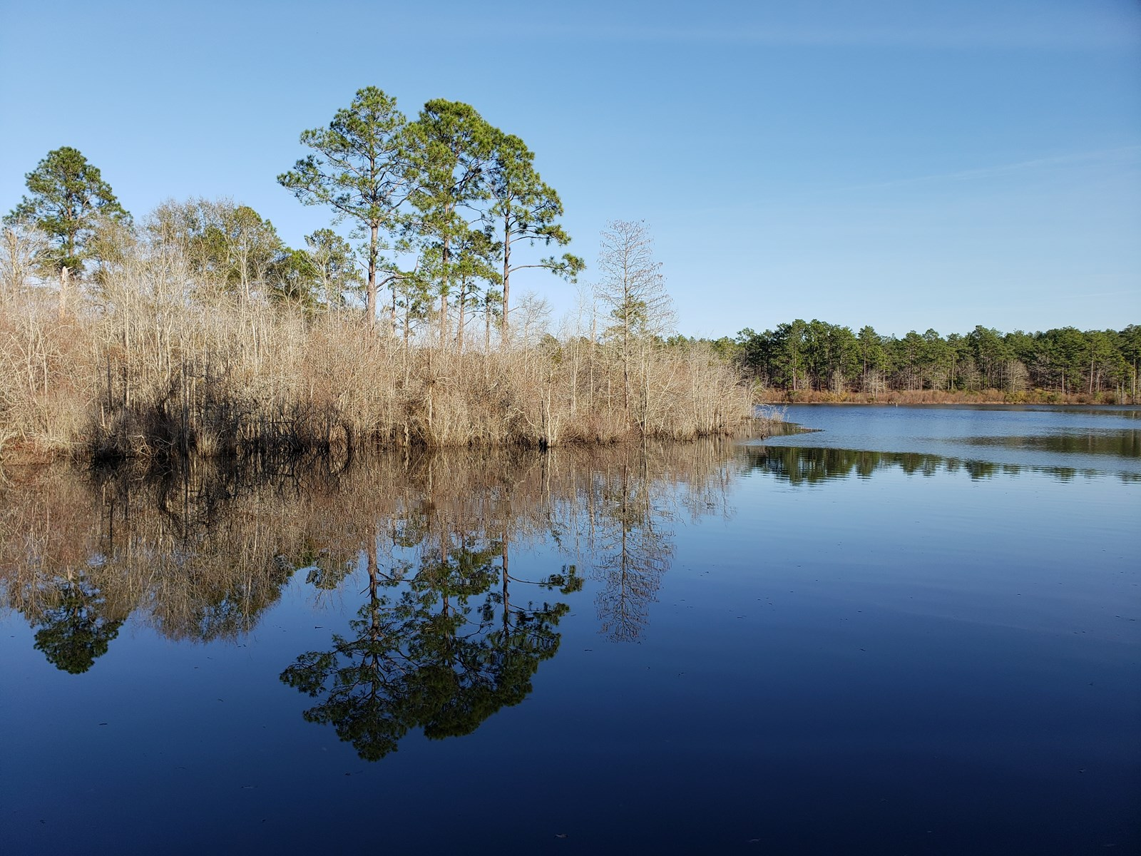 5.7 Acre Waterfront Homesite in Bulloch County