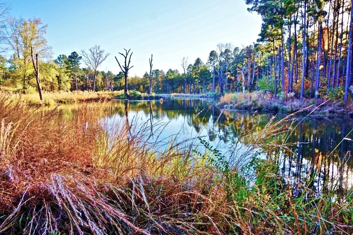 52 Acre Woods/Pasture/ Pond Property for Sale Caddo Parish