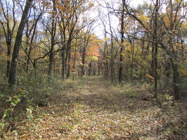 Managed Hunting Recreational Property in Chariton County, MO
