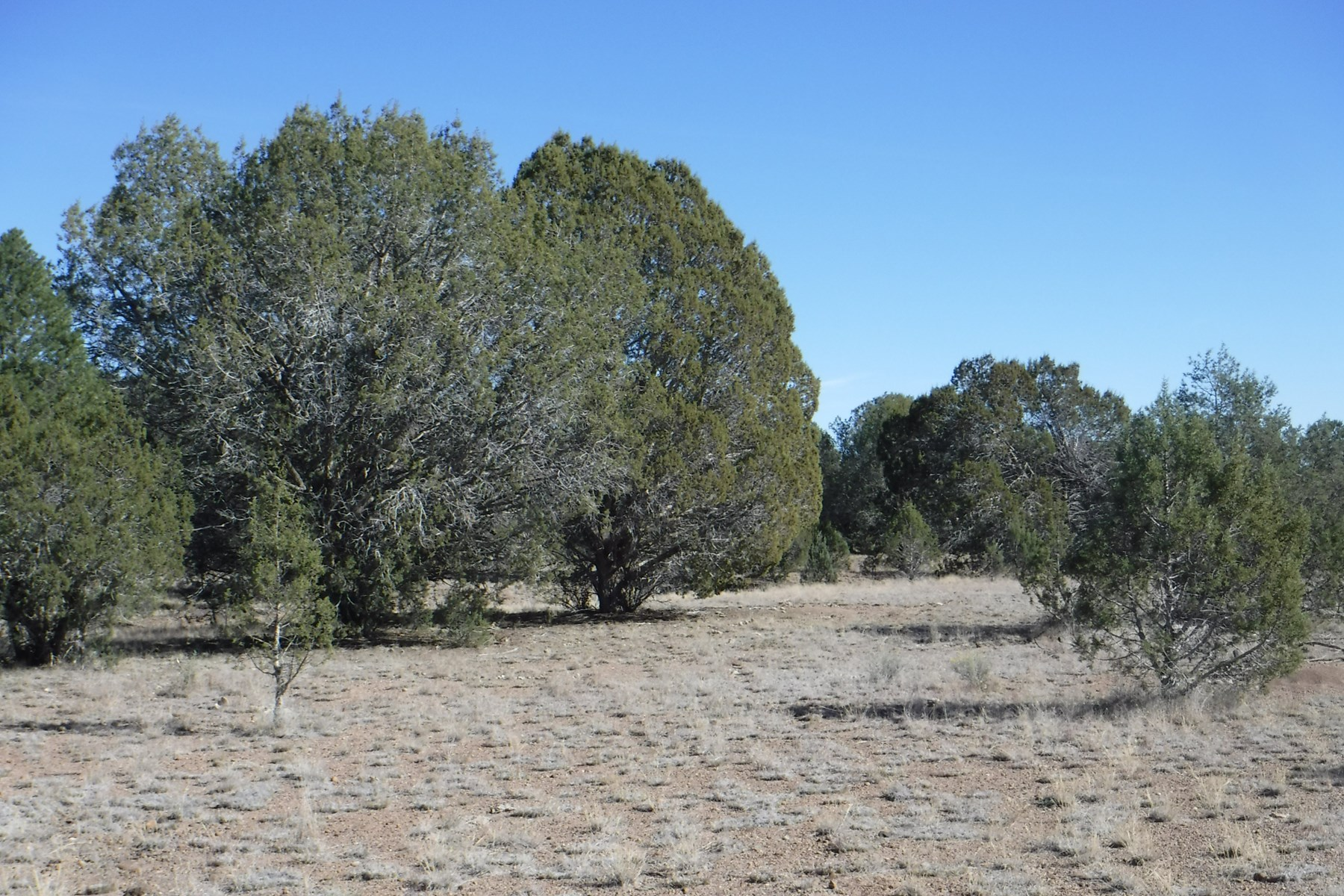 40 Acres for sale $18,000!  Owner Financing Possible