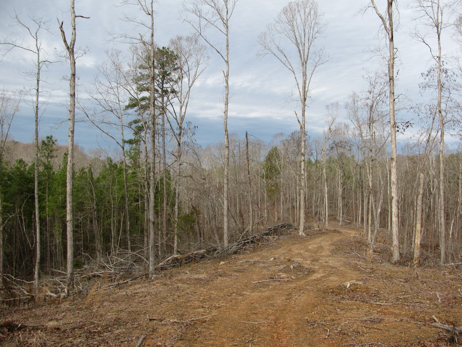 LAND IN TN FOR SALE W/CREEK, HUNTING, OWNER FINANCING