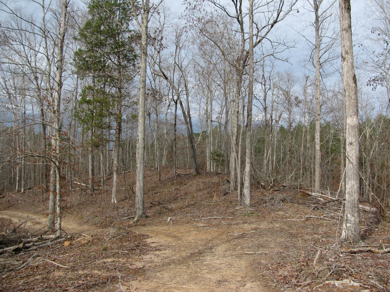 LAND IN TN FOR SALE WITH CREEK, HUNTING, OWNER FINANCING