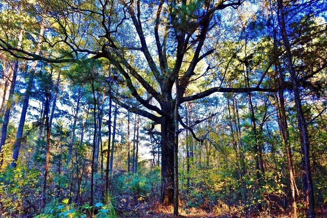 78 Acres of Recreational Timber Land for Sale Caddo Parish