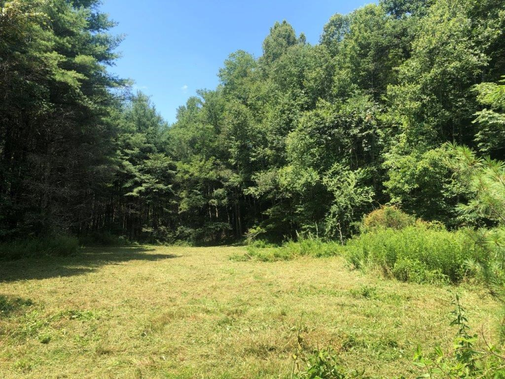 Hunting or Recreational Land in Floyd, VA For Sale