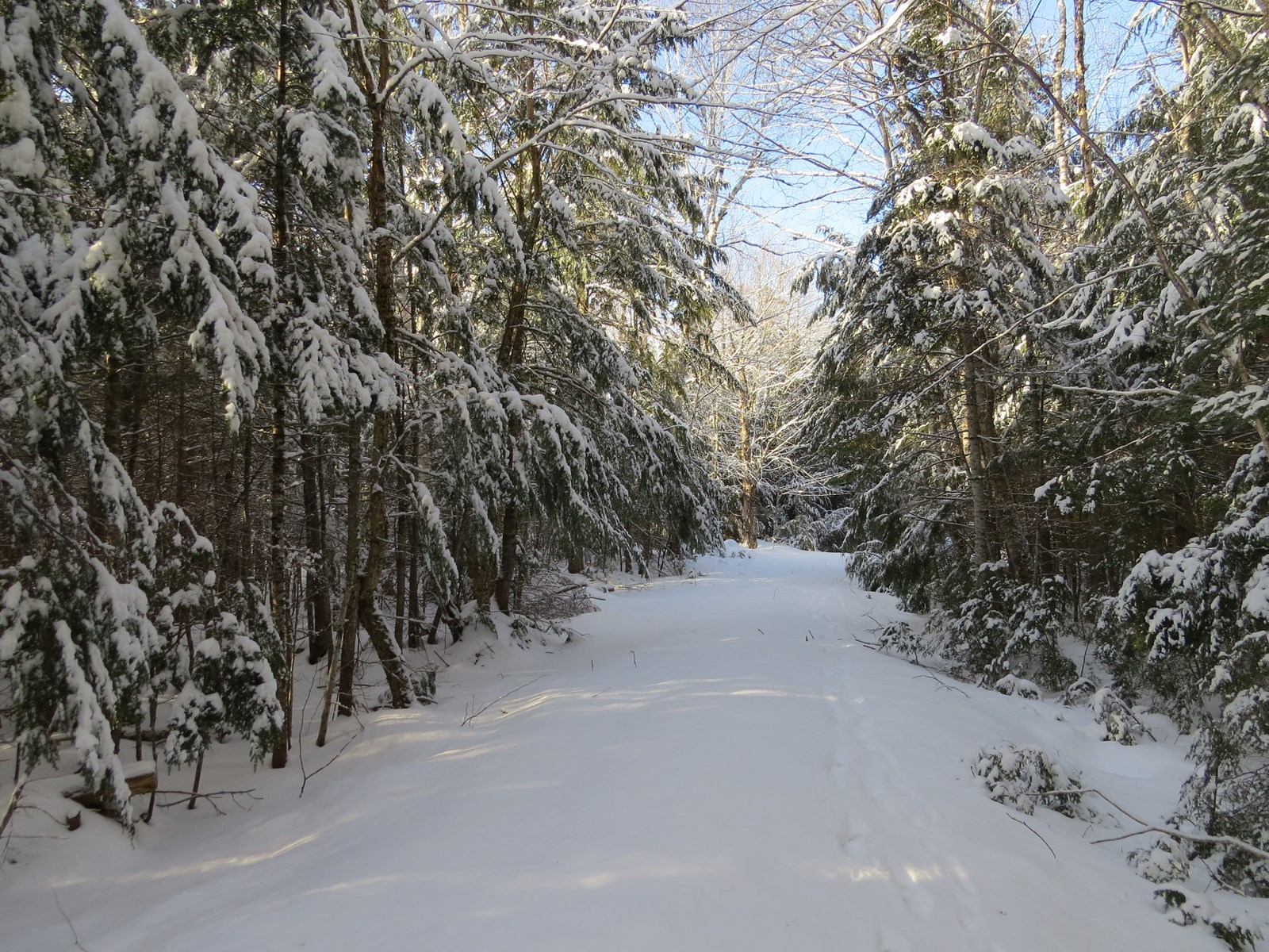 Forested Acreage For Sale on Great Pond in Maine
