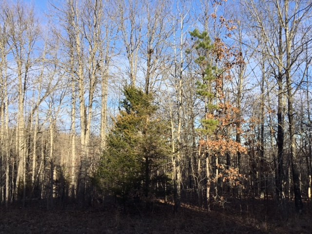 Hunting Land for Sale in the Missouri Ozarks