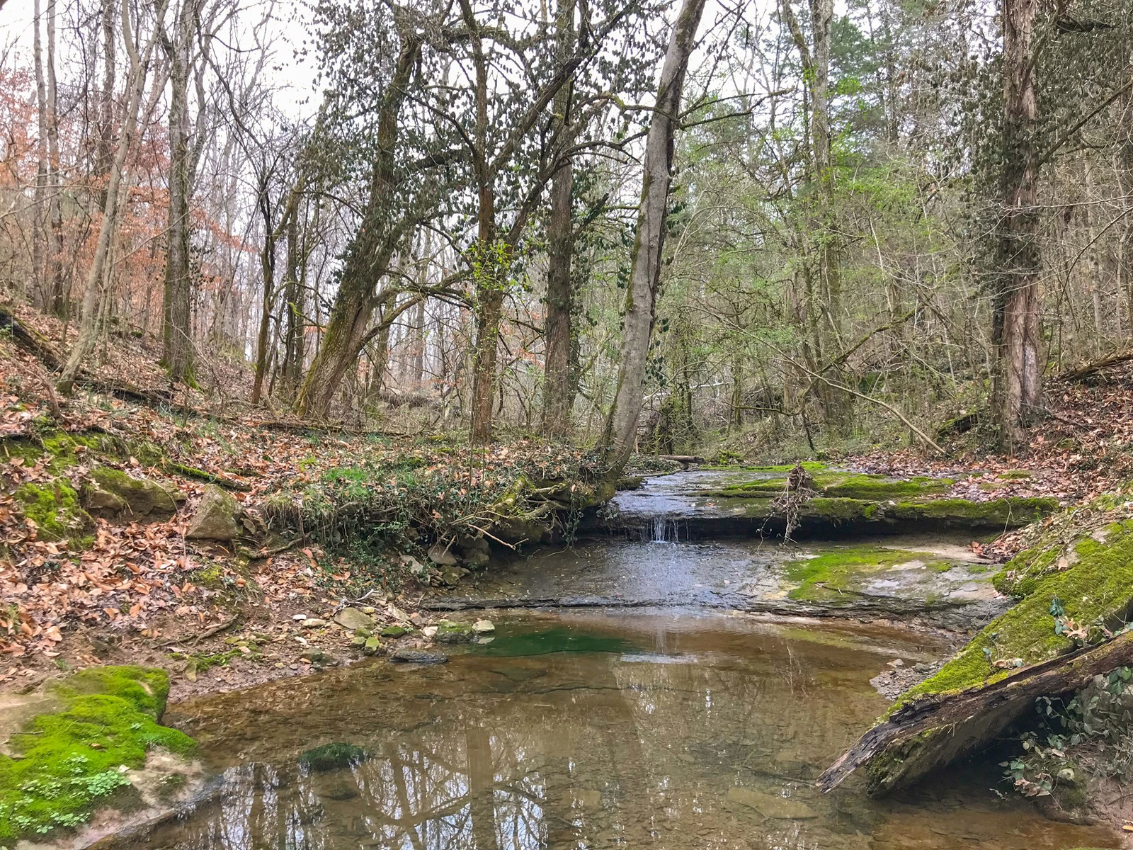 Petersburg, Tennessee Lincoln County Hunting Land For Sale