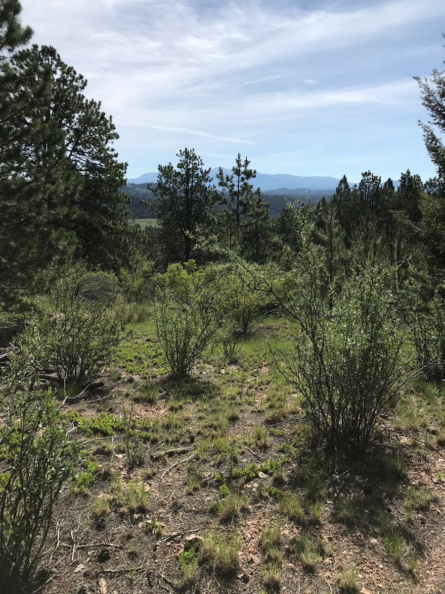Mountain Land with Pikes Peak Views